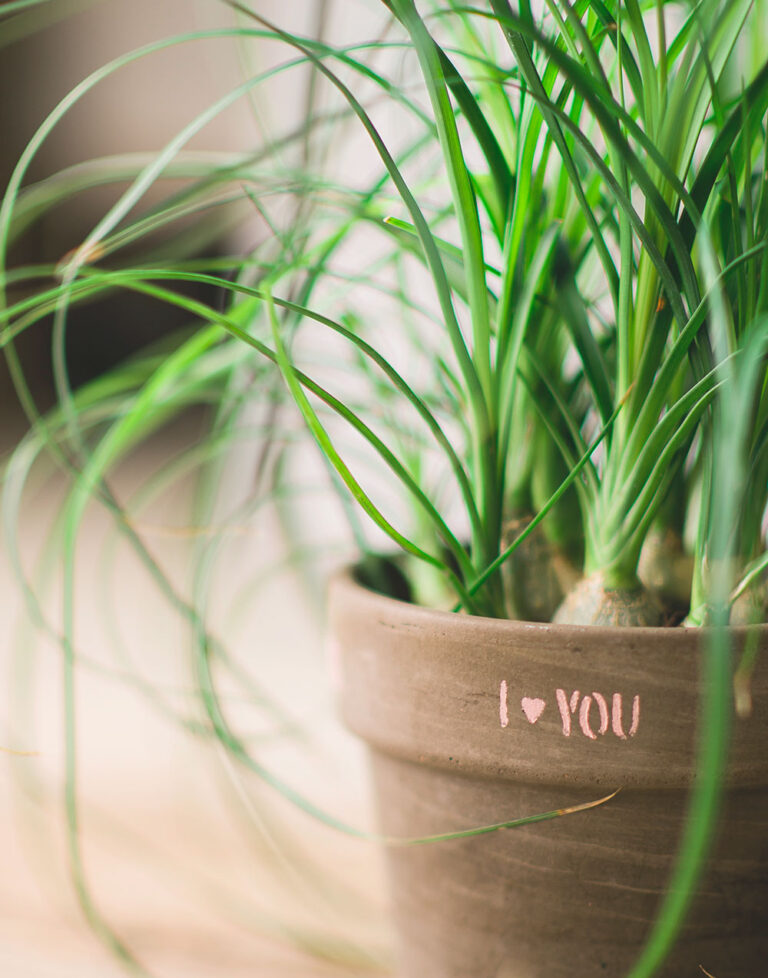 close up view of a ponytail plant in a dark clay pot painted with the words I Love You