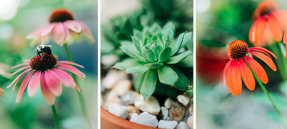 garden scenes of flowers and succulents