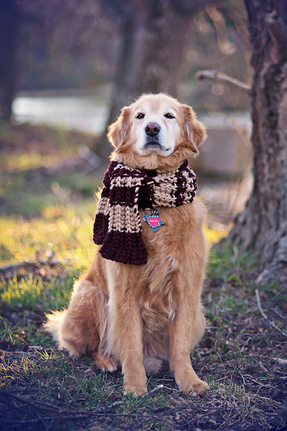 golden retriever in a scarf sitting with a big tree