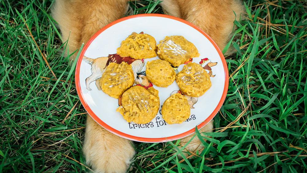 closeup of a plate of home baked sweet potato dog treats on a dog's paws