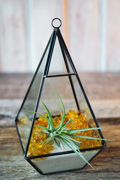 an air plant in a geometric glass container