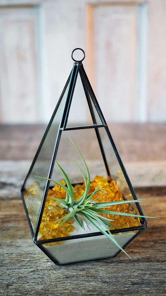 Air Plant Terrarium An Easy Indoor Gardening Project Pattymac Makes