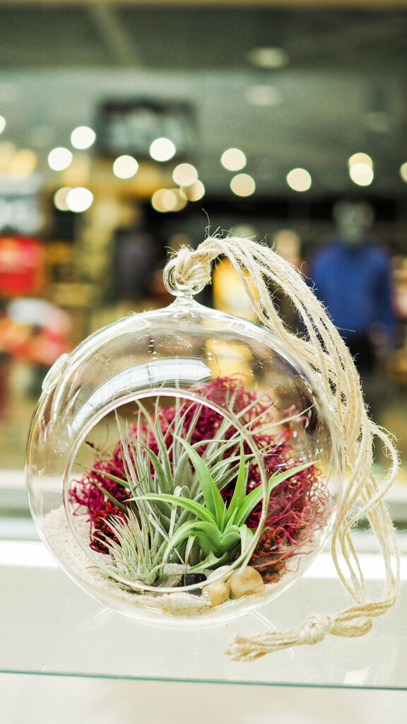Air plants displayed in a large round glass vessel with rocks and dried moss