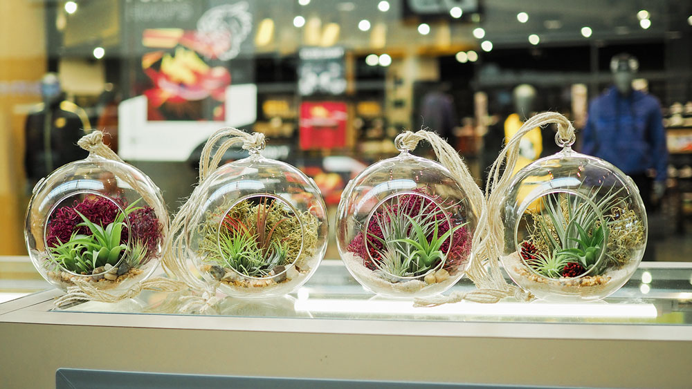 a row of medium glass containers showing off different air plant arrangements