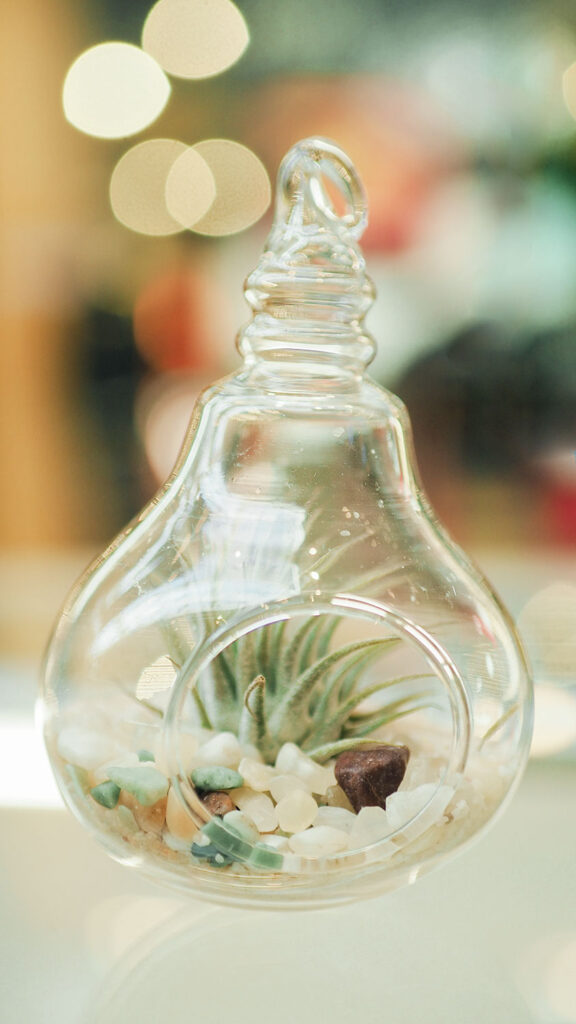 a tiny glass container shaped like a lightbulb used as a planter for a small air plant