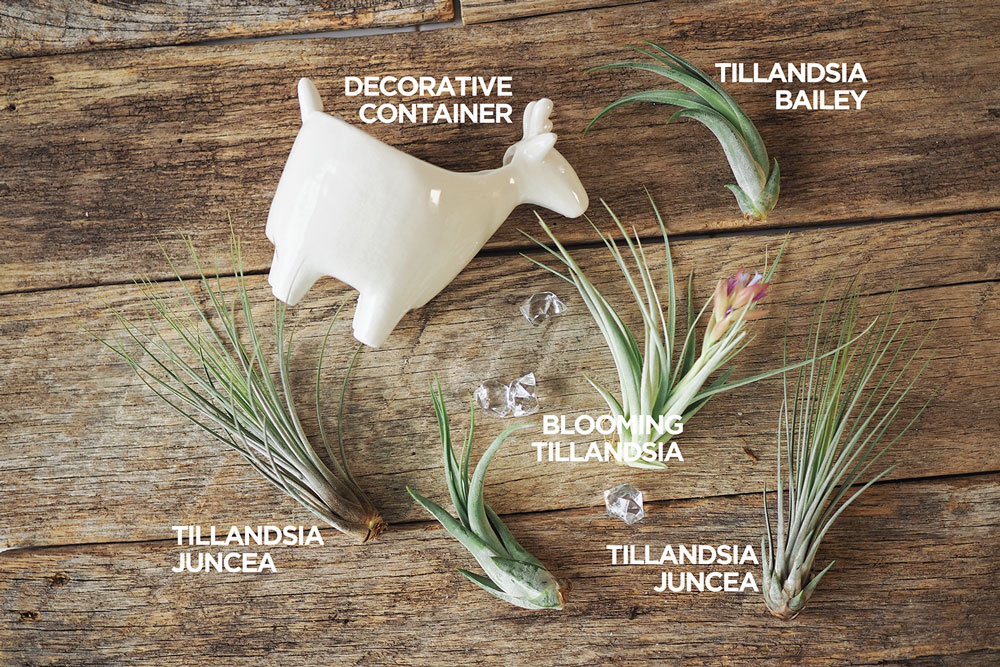 a collection of air plants with a decorative container