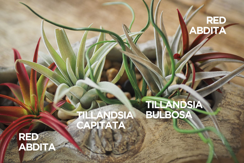 a collection of air plants in a decorative container